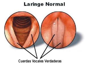 cuerdas-vocales