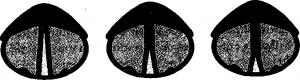 corde vocali nei registri
